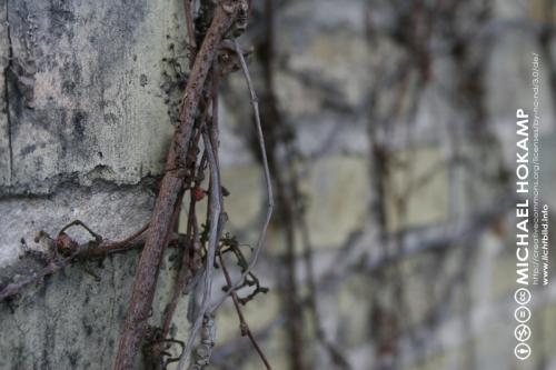 winterstein.jpg