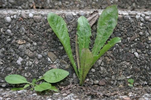 steinpflanze.jpg
