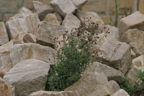 steinhaufen.jpg