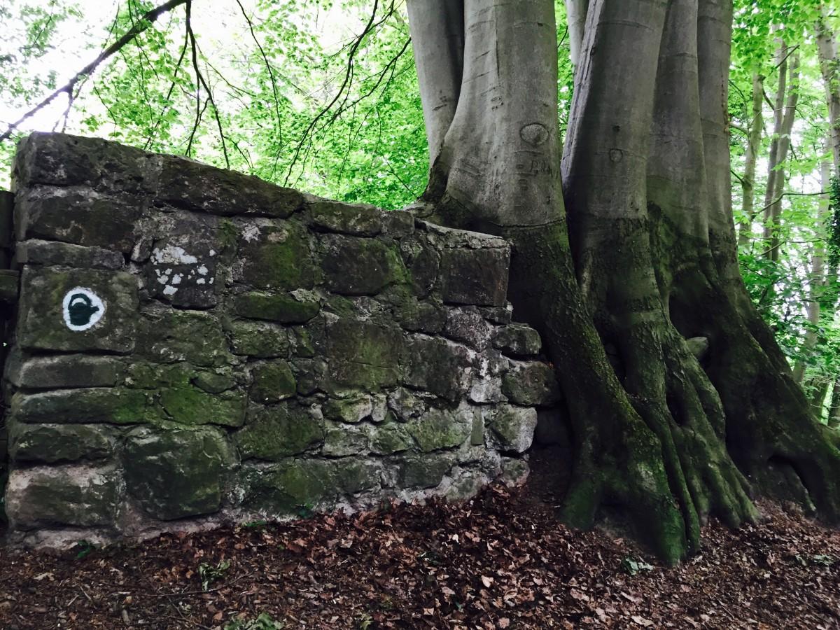 steinmauer durch Baum